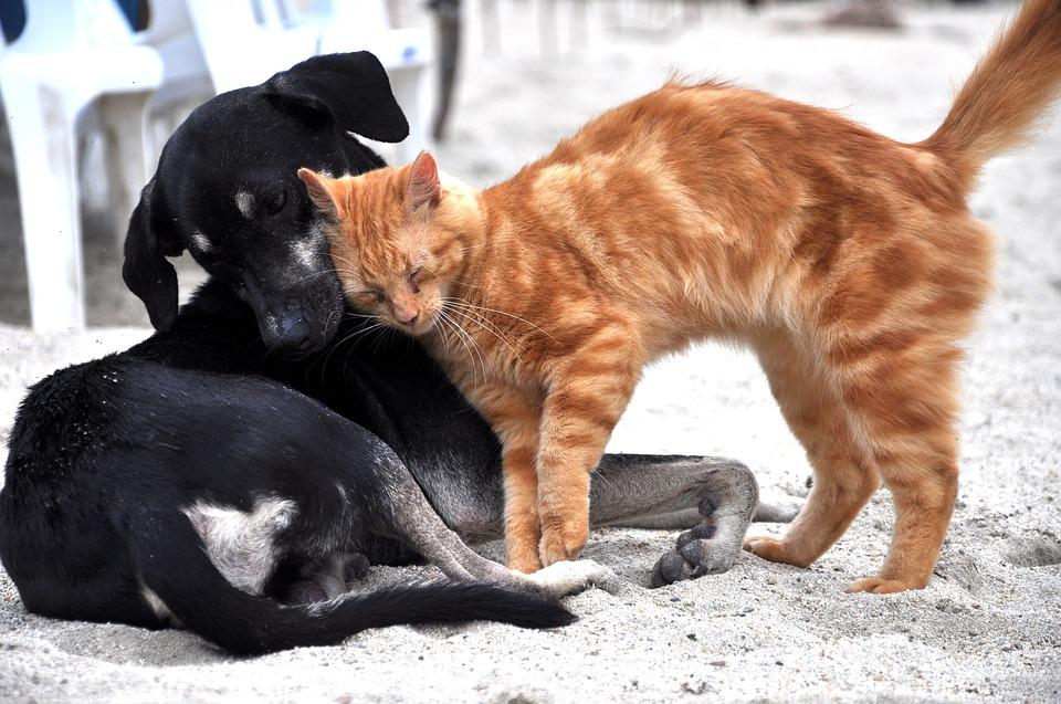 Chat ou chien ?