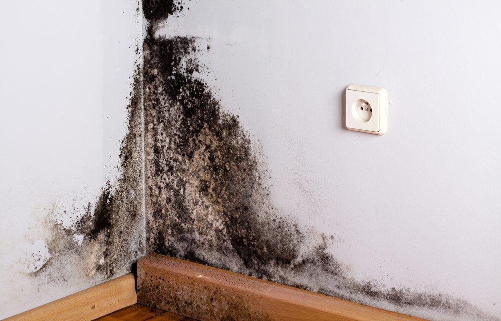 Comment éliminer les moisissures de son logement : principes de base