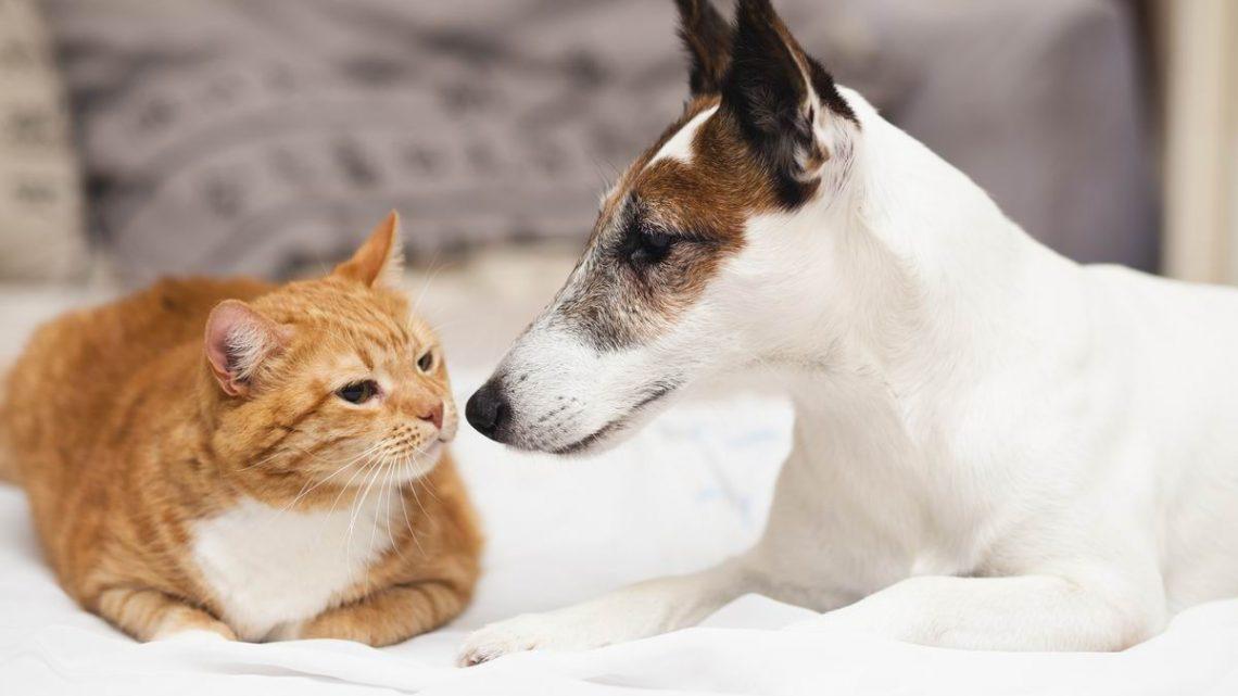 Utilisation de CBD dans la médecine vétérinaire