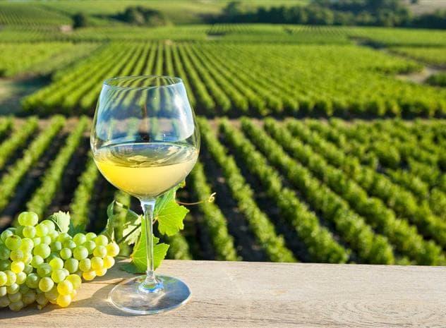 Peut-on bien gagner sa vie dans un vignoble ?